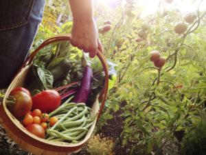 gardening in grand forks