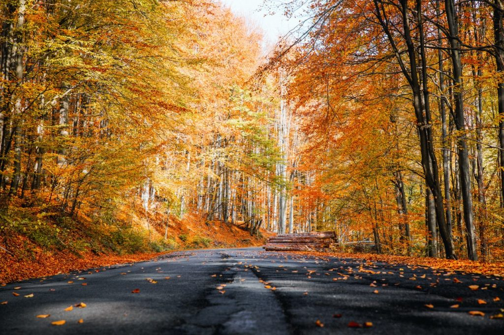 Bright fall leaves line a road.