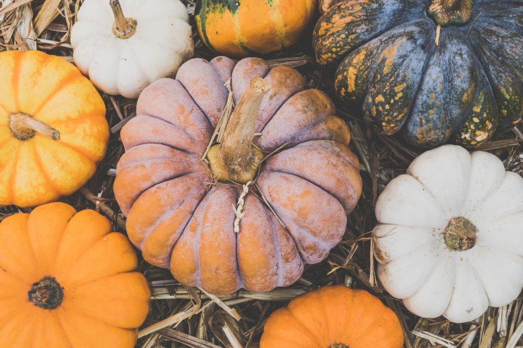 Pumpkins during an autumn harvest.